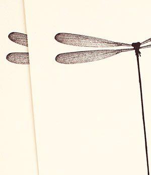 libellule & cabochon